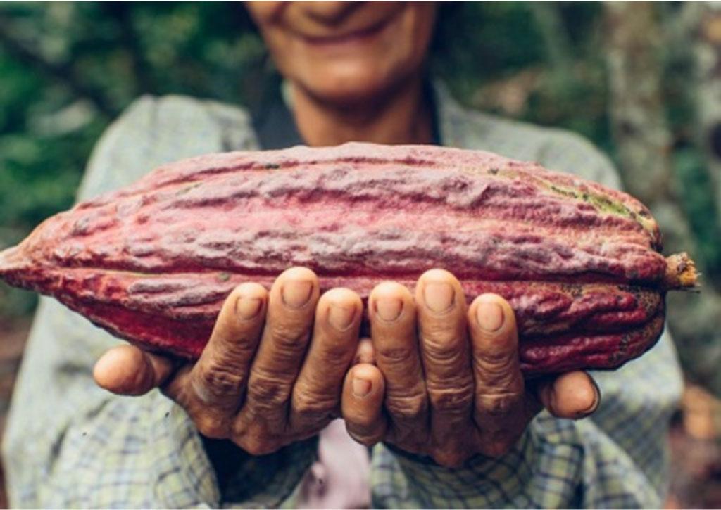 cacao-chuao-venezuela