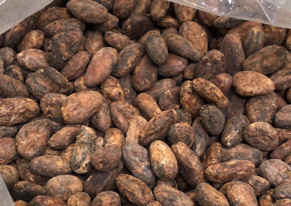 cacao-de-cuba