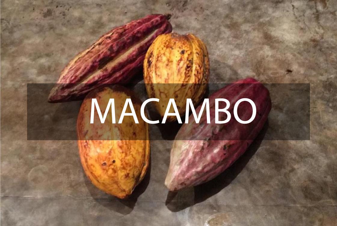 MACAMBO